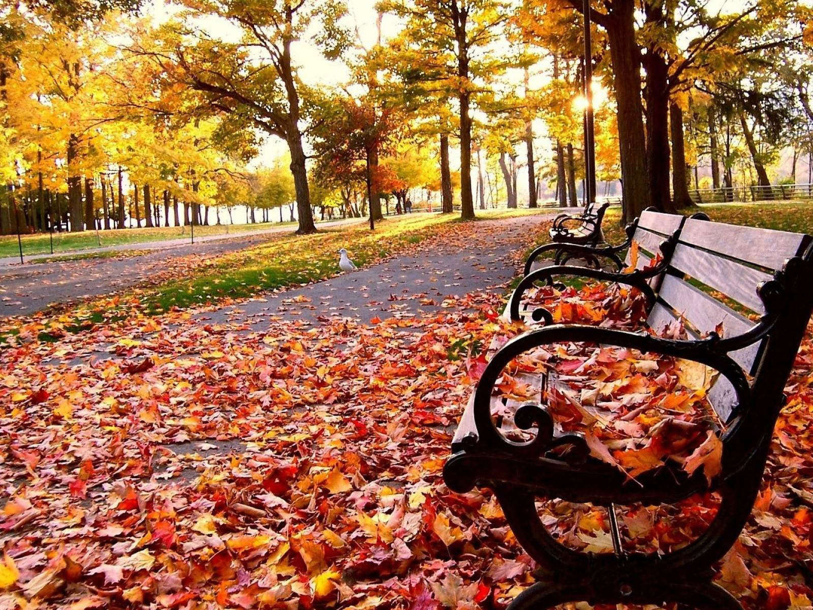 Leaf It To Me: 7 Cool Tips for Fall